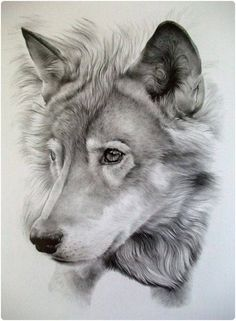 Realistic Drawings Realistic Pencil Drawings of Animals Pictures) - Pencil Drawings Of Animals, Realistic Pencil Drawings, Amazing Drawings, Beautiful Drawings, Cool Drawings, Amazing Art, Drawing Animals, Drawings Of Wolves, Hipster Drawings