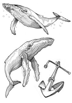 Fineliner Ink and Pencil Animal Drawings - Whale Sketch, Whale Drawing, Doodle Drawing, Drawing Sketches, Drawing Ideas, Animal Sketches, Animal Drawings, Ink Illustrations, Illustration Art