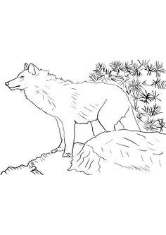 Coloriage du grand loup qui guette sa proie