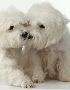 Pooch smooch-This is like Izzy & Ozzy