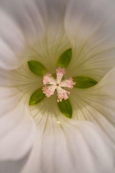 Blumen http://milanspa.vn/dich-vu/tri-hoi-nach/benh-hoi-nach-co-the-chua-khoi-hoan-toan.html
