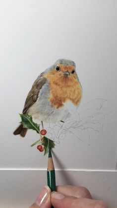 Work in progress of a Robin in coloured pencil on watercolour paper Bird Drawings, Realistic Drawings, Colorful Drawings, Animal Drawings, Bird Pencil Drawing, Pencil Sketching, Colourful Art, Horse Drawings, Drawing Faces