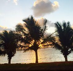 Three Palms Please