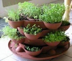 Indoor herb garden. Love this!