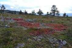 September 2013 Lapland Finland, September 2013, Mountains, Nature, Travel, Naturaleza, Trips, Traveling, Nature Illustration
