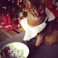 Noodle getting ready to judge the festive givaway. Entry to Leith Library #festivefurballs from @paper_robot