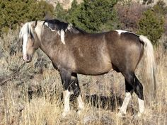 WILD MUSTANG - Google Search