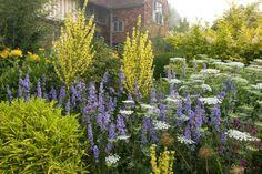 verbascum-in-long-border Landscape Architecture, Landscape Design, Creative Landscape, Plant Design, Garden Design, Colorful Garden, Exotic Plants, Topiary, Garden Planning