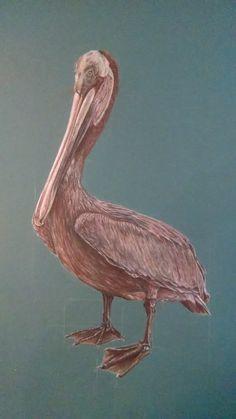 Nigel, the Brown pelican – Part 2