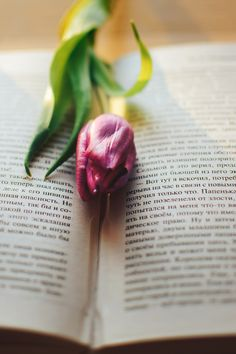 #spring #morning #photo #nature #flower #book #nikon #d7100