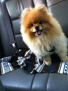 Walter rides inside, like all dogs should. Mitt is mean. Grrr.