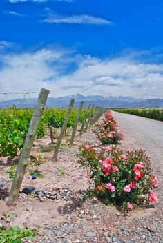 Bodegas Ruca Malen. Mendoza, Argentina.