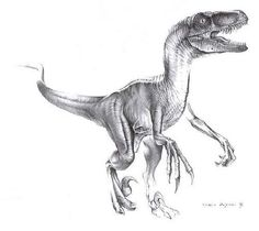 velociraptor ankle tattoos - Google Search