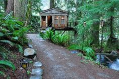 Jungle treehouse.
