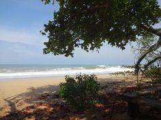 Playa Bluff, Isla Colon: Zobrazte recenze, články a fotografi z Playa Bluff na webu TripAdvisor.