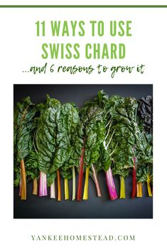 Swiss Chard is a colorful and delicious vegetable that thrives in containers or gardens. Also, learn 6 Swiss Chard benefits and how to plant, grow, and harvest chard. Swiss Chard Plant, Growing Swiss Chard, Side Recipes, Real Food Recipes, Swiss Chard Recipes, Canning Recipes, Canning 101, Sauteed Spinach, Vegans
