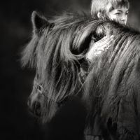 Always wanted a horse.. Beautiful animals.