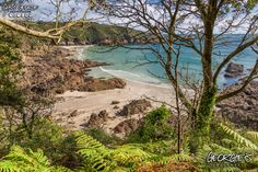 On the path above Moulin Huet on this beautiful Saturday, September afternoon #GreatThings #LocateGuernsey #SafeHaven   Link to the whole collection of 'Georgie's Guernsey' :-http://chrisgeorge.dphoto.com/#/album/4daaes  Picture Ref: 17_09_16 — in Guernsey.