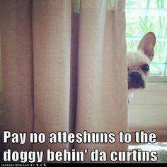 Pay no atteshuns to the doggy behin' da curtins