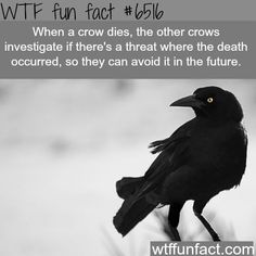 WTF Fun Facts on Pinterest