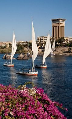 Movenpick Hotel on the Nile in Aswan, Egypt which is as far as you can go down the Nile by boat