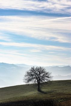 Albero solitario -Colline Castrocaro Terme #castrocaroterme