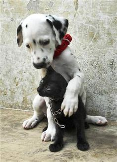 Cat-puppy pals.... This is so sweet. Pals. Unconditional friendship. There is a lot to learn from animals.