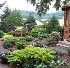 hosta front garden ideas