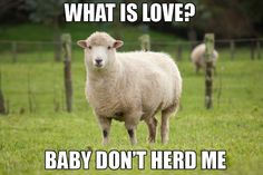 17 Animal Memes That Will Make Every Pun-Lover's Day