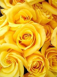 Hottest Photos Yellow Roses wallpaper Style Red roses usually are the perfect method to communicate feelings one could have got intended for another. Yellow Rose Bouquet, Yellow Rose Flower, Yellow Flowers, Flowers Wallpaper, Flower Backgrounds, Wallpaper Ideas, Small Rose, Small Small, Flower Aesthetic