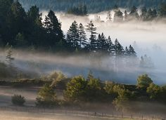 Morning fog in Sonoma County