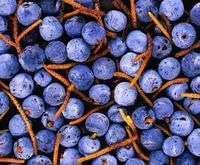 Blueberry infused gin