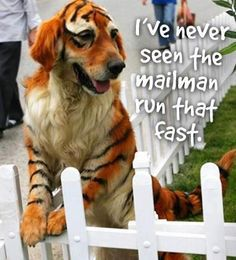 I've never seen the mailman run that fast.