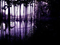 purple_forest_by_nellers500-d6enj3h.jpg (1032×774)