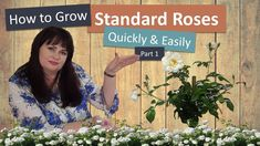 In this video ( Part we will show you how to grow standard roses quickly and easily. Propagating standard roses is an extremely valuable skill that any ho. Standard Roses, Horticulture, Training, Garden Planning, Work Outs, Excercise, Onderwijs, Race Training, Exercise
