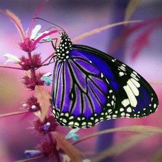 I ❤ butterflies . . .    http://www.shortbizz-artikel.blogspot.com/2012/08/jobsingles-wir-verlieben-branchen-jetzt.html