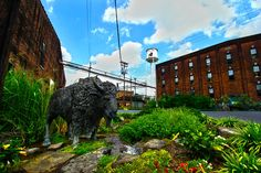pilgrimages and traverses ⊳ Buffalo Trace Distillery in Frankfort, KY Buffalo Trace, Nature Spirits, My Old Kentucky Home, Pilgrimage, Distillery, Bourbon, Trail, Horses, Places