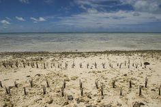 Cinco islas que podrían estar bajo el agua en tan solo 50 años Fiyi, Tuvalu, Kiribati, Vanuatu e Islas Marshall están condenadas a desaparecer si continúa subiendo el nivel del mar