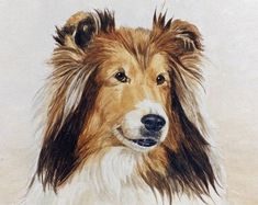 The Shetland Sheepdog originated in the and its ancestors were from Scotland, which worked as herding dogs. These early dogs were fairly Sheepdog Tattoo, Golden Retriever Art, Colley, French Bulldog Art, Shetland Sheepdog Puppies, Herding Dogs, Sheltie, Doge, Pet Portraits