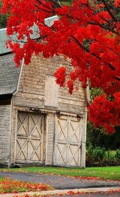 White Barn, Red Fall Leaves                              …
