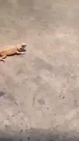 Running really fast funny animals aww