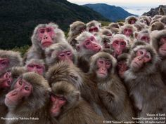 A look at the winning wildlife photography from the 2017 BigPicture Natural World Photography Competition, which highlights today's environmental issues. Primates, Mammals, World Photography, Wildlife Photography, Photography Courses, National Geographic, Japanese Monkey, Animals Beautiful, Hilarious Animals