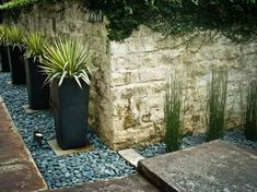 Agave in hohen Pflanzkübeln bepflanzen - Vorgarten gestalten