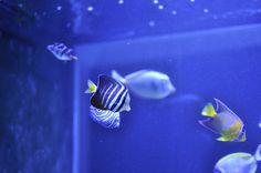 Bespoke, through-wall marine aquarium designed and installed by Aquatic Gems Ltd.  For more on this tank: www.aquaticgems.co.uk