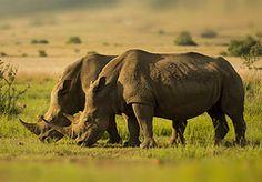 Hope Elephant, Animals, Animales, Animaux, Animais, Elephants, Animal