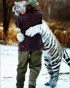 #tigre #tiger #animals #love #animales