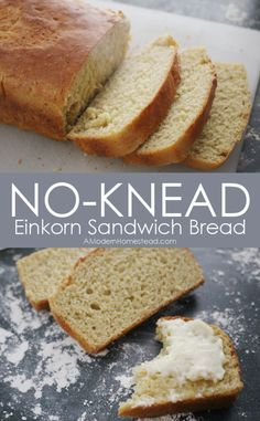 ... FRESH BREAD!! No Knead Einkorn Sandwich Bread from A Modern Homestead