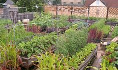 Get Tips Here For A Thriving Garden!