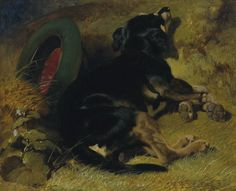 A Dog Sleeping Near a Hat on a Grassy Bank by John Frederick Herring | Art Posters & Prints