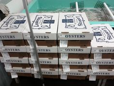 oysters arrival
